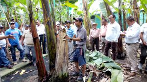 MINAGRI asesora a pequeños productores de banano orgánico en Mesa Técnica Binacional