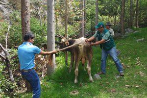 SENASA intensifica vacunación contra la rabia en zonas rurales de Apurímac