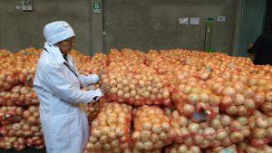 Senasa certifica 30 toneladas de cebolla blanca para su exportación a Chile