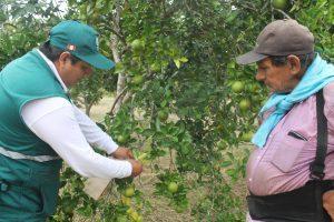 Senasa certifica lugar de producción para la exportación de naranja en Satipo