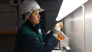 Senasa certifica más de 35 mil toneladas de cítricos para exportación