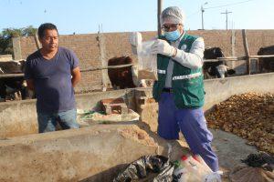 Senasa monitorea alimento concentrado para descartar agente causal del Mal de las Vacas Locas