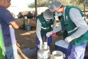 Senasa monitorea presencia de contaminantes en leche cruda de vaca