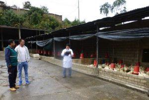 Senasa otorga autorizaciones a centros de faenamiento avícola en Abancay