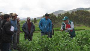 Países de América Latina y Europa se reunirán en Cusco para impulsar agricultura orgánica _Charla quinua productores