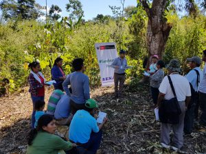 Pequeños productores de Madre de Dios interesados en la producción de cacao orgánico