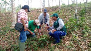 Productores de Ucayali comprueban buenos resultados del control biológico frente a plagas forestales