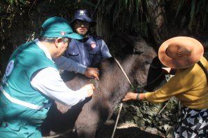 Senasa evalúa población de murciélagos cerca a comunidades campesinas y nativas de Junín